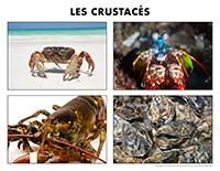 Poni découvre et présente-Les crustacés