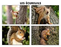 Poni découvre et présente-Les écureuils