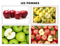 Poni découvre et présente-Les pommes-2