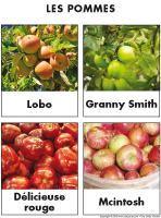 Poni découvre et présente-Les pommes