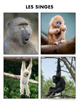 Poni découvre et présente-Les singes