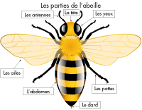 Poni présente - Les abeilles