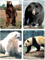 Poni présente - Les ours
