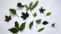 Ramasser feuilles-01