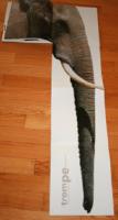Rikiki et Mastodontes-2