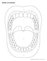 Rouler et colorier-3D-La santé dentaire