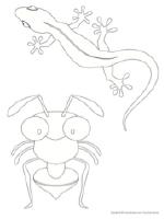 Sacs de lézards serpents et insectes colorés-9