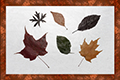 Tableau de feuilles sechees-1