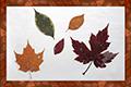 Tableau de feuilles sechees-2