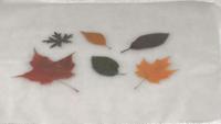 Tableau feuilles-04
