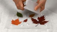 Tableau feuilles-08