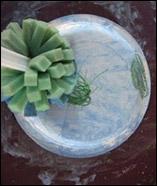 Peinturez les assiettes avec la gouache bleue.