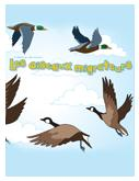 Oiseaux Migrateurs